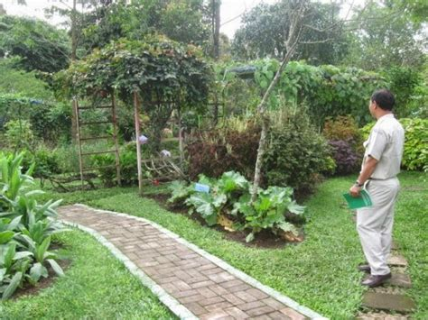 tanaman kaya antioksidan bisa jadi tanaman hias