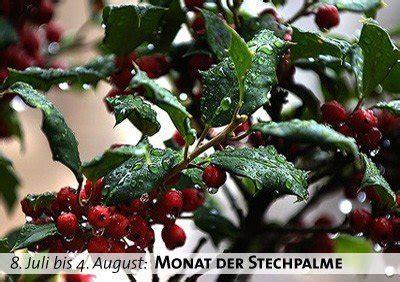 Monat der Stechpalme – 08. Juli bis 04. August   Practical ...