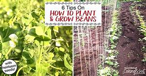 How To Grow Green Beans  6 Tips