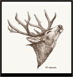 Deer Skull Drawings Cafepress Wall Art Posters