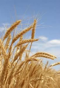 Idaho Wheat Commission News: September 2010