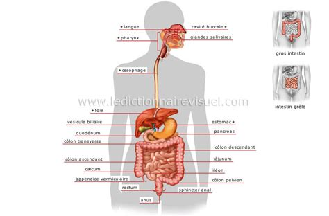 probleme de dos contractures et raideurs musculaires muscles poubelles et prevention des