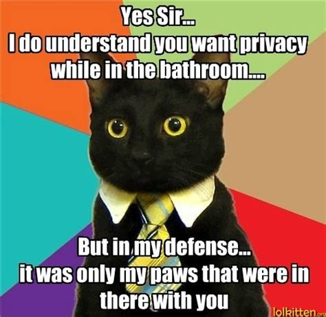 Animal Advice Meme - let meow explain lolkitten