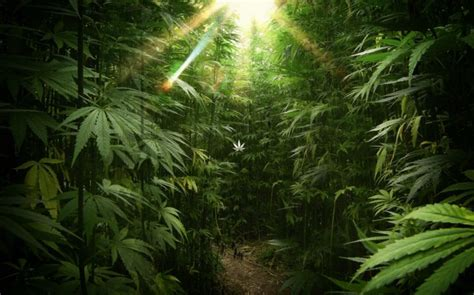 weed drugs cool images laptopmarijuana high