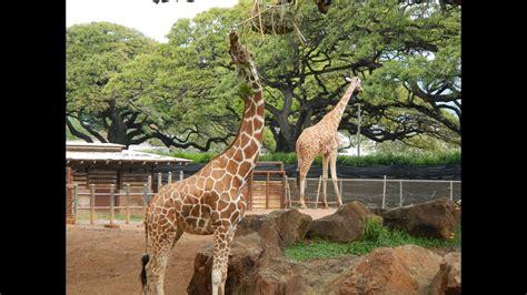 zoo hd honolulu