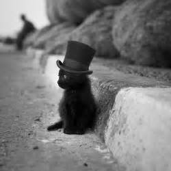 black cat hat 1 thing you probably didn t about image search