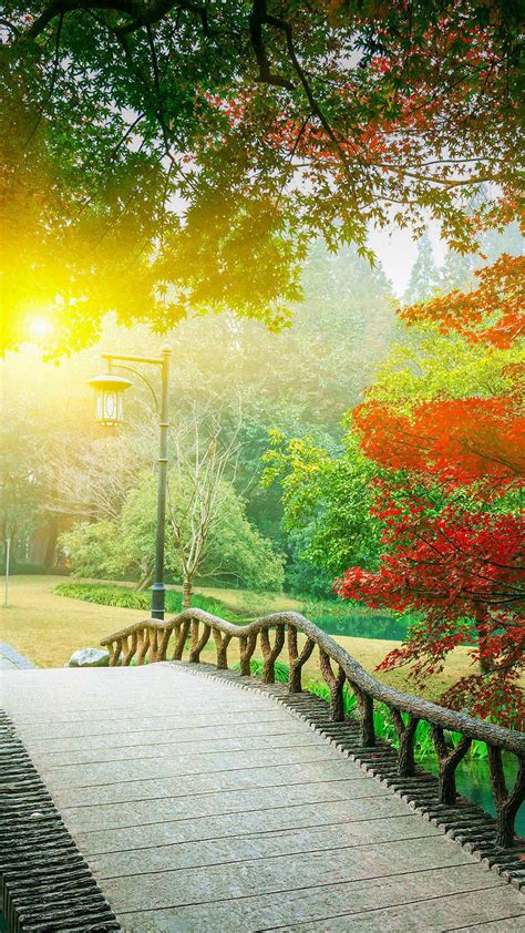 hd romantic afternoon park background sunlight