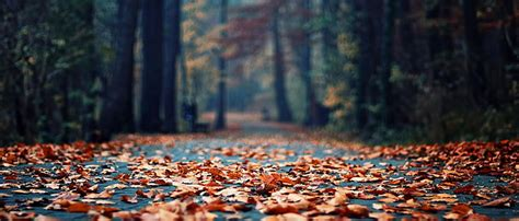 Fall Esthetic Backgrounds by Taobao Womens Shoes Fall Autumn Leaves Path Road Hazy