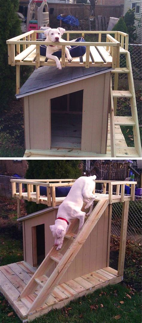 dog houses   dog owners    fallinpets