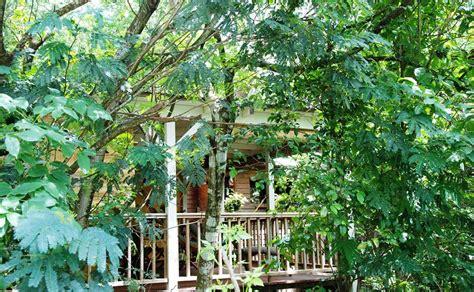 Au Jardin Des Colibris Deshaies Guadeloupe by Au Jardin Des Colibris Deshaies Guadeloupe