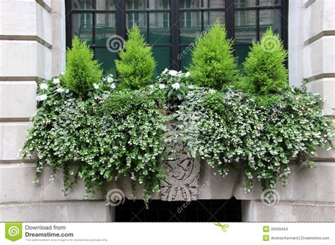window box  small conifers stock images image