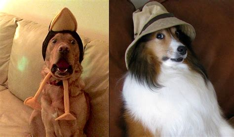 dogs  arent impressed   hats