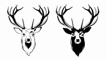 Deer Head Moose Antler Clipart Face Male