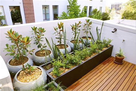 plants for rooftop gardens play a trick in your limited space trough rooftop gardens