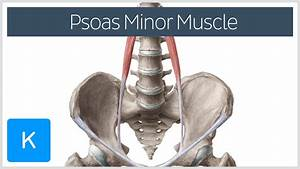 Psoas Minor Muscle Origin And Insertion
