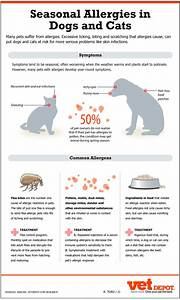 great infographic about pet allergies causes symptoms With dog food allergy symptoms