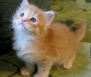 20+ Photographs of Adorable Cats - PickChur