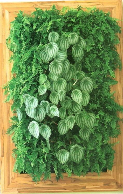 vertical garden plants  care tips gardenoholic