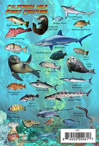 California Kelp Mini Fish Card  U2013 Franko Maps