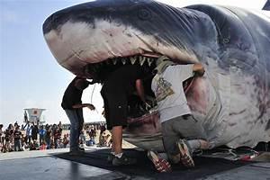 Hidden Unseen: Sharks Are Jawsome!