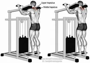 Gripless Shrug Exercise Instructions And Video