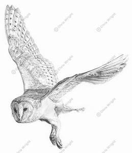 Owl Flying Drawing | www.pixshark.com - Images Galleries ...