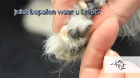 hoe knip ik de nagels van mijn hond youtube