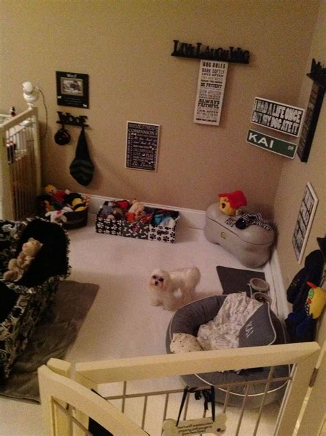 kais dog room thought dogs spoiled