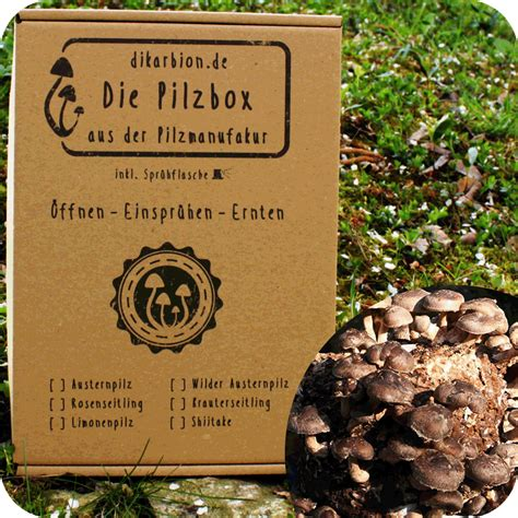 Shiitake Pilze Im Garten by Shiitake Z 252 Chten Pilzbox Fertigkultur Shiitake Pilze Anbauen