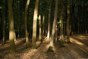 Sunny, Woods
