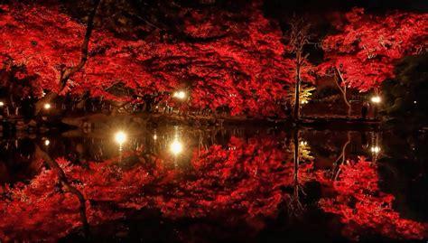 5 trees that look the best in outdoor lighting