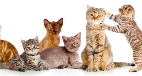 cats called social cat groups animal solitary kucing flock wolves pack bagus makanan kemasan lumpur kuala hotel yang sheep specific