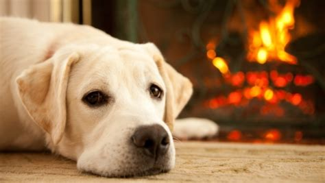 dogs for fireplaces how to avoid unexpectedly high winter energy bills