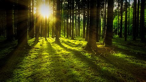 ray  sunlight flowing  trees  stock photo