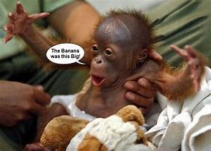 Funny and Cute Baby Orangutan talking to his Keeper ...
