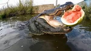 Slow-Motion Camera Catches Force Of Alligators Bite - YouTube