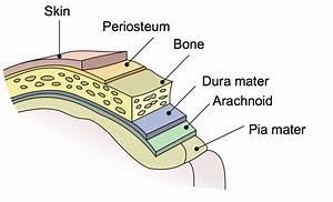 Chinese Company Introduces Bioprinted Dura Mater for Use ...