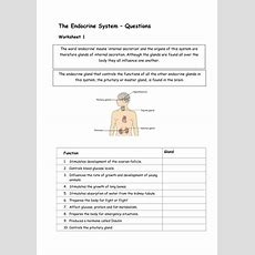 Glands And Hormones In The Endocrine System By Sharley23  Teaching Resources Tes