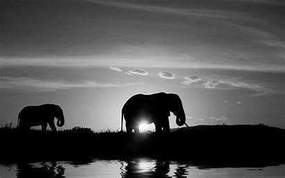 Desktop Backgrounds Wallpapers Mobile Elephant