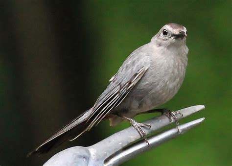 beaks wings  backyard  home birds