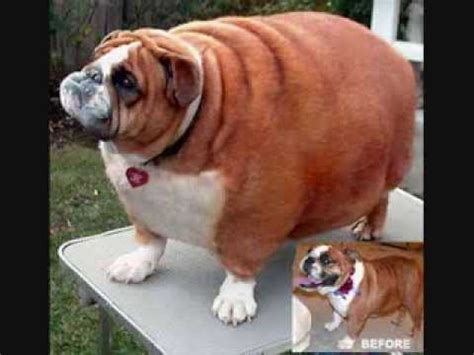 fat cats   fat dogs youtube