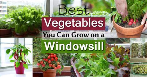 vegetables grow window windowsill vegetable garden sill gardening balcony kitchen organic there lovers