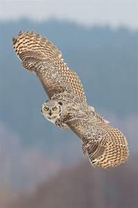 43 best ideas about In Flight on Pinterest | Owl, Red fox ...