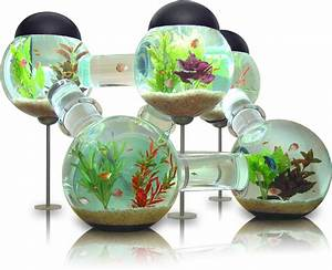 Labyrinth Aquarium: Luxurious home for your fish ...