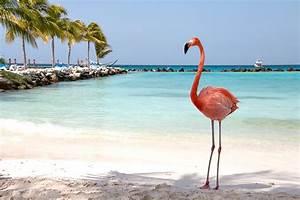 Bilder Am Strand : strand tr ume auf aruba karibik reiseblog travel on toast ~ Watch28wear.com Haus und Dekorationen