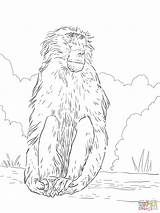 Baboon Coloring Chacma Printable Baboons Results Categories sketch template