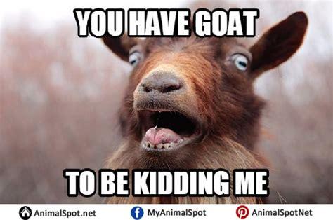 Billy Goat Meme - goat memes