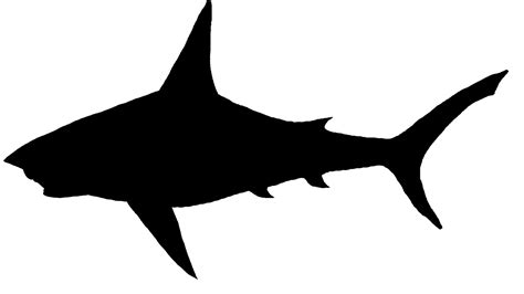Shark Sil  Free Images At Clkercom  Vector Clip Art