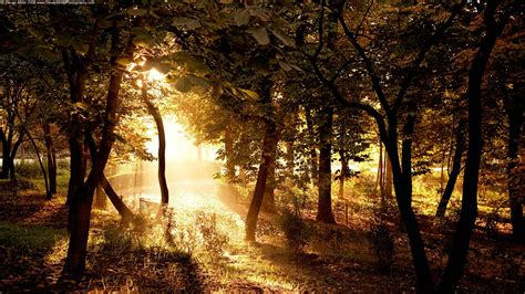 full hd wallpaper sunrise forest tree lights rays desktop