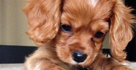 Ja, vierbeinige freunde nehmen ihren besitzern viel ab. Liste der süßesten Hunderassen der Welt mit Bild. Machst du ihnen Haustiere? - Süß ... - Hunde ...